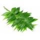 Indinio nimbamedžio aliejus (ekologiškas, nerafinuotas), 50ml/100ml